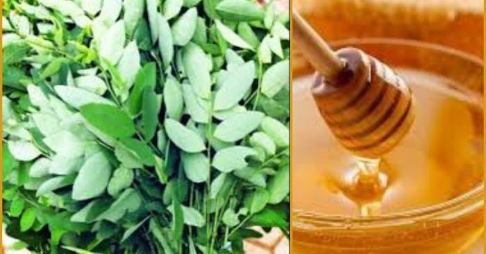 Sử dụng mật ong cùng rau ngót chữa nhiệt nhanh nhất
