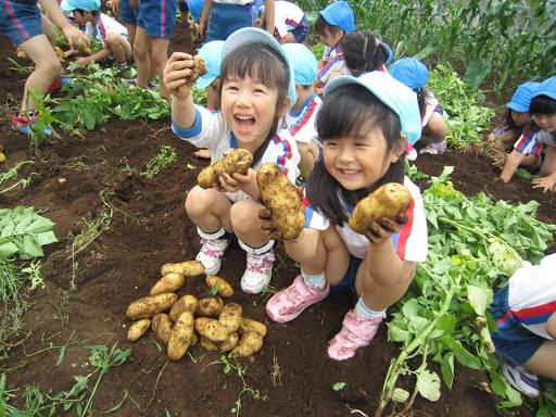 Khoai tây là loài cây nông nghiệp ngắn ngày, trồng lấy củ chứa tinh bột. Chúng là loại cây trồng lấy củ rộng rãi nhất thế giới và là loại cây trồng phổ biến thứ tư về mặt sản lượng tươi - xếp sau lúa, lúa mì và ngô.