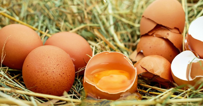 Cấu tạo của trứng, về cơ bản được chia làm 4 bộ phận gồm lòng đỏ, lòng trắng, màng vỏ và vỏ trứng. Chẳng hạn như ở loài gà, lòng đỏ chiếm khoảng 31,9% khối lượng, lòng trắng 55,8%, vỏ trứng 11,9% và màng vỏ 0,4%.