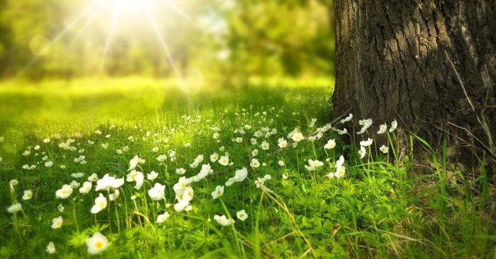 Đời người là khổ, khổ là bởi không muốn buông bỏ những gì đã là quá khứ. Hãy cứ sống như những đóa hoa an nhiên dưới ánh nắng ban  mai