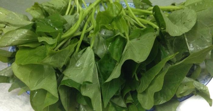Lá rau khoai lang là loại rau quen thuộc trong bữa ăn của gia đình Việt.