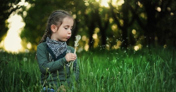 Bé gái đang thổi những cánh hoa bồ công anh trên đồng cỏ xanh mát.