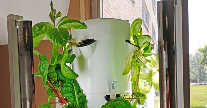 Khi thực hiện cách trồng rau sạch thủy canh, bạn không được bỏ qua yếu tố ánh nắng mặt trời. Cây cần quang hợp để phát triển nên yếu tố này được đánh giá là quan trọng nhất để rau phát triển, cho năng suất tốt. Bạn nên chọn vị trí sân thượng hay ban công có thời gian chiếu sáng trực tiếp tối thiểu là 6 đến 12 tiếng.  Nếu khoảng trồng cây bị che chắn bởi nhà cao hoặc tấm tôn trên mái bằng, khả năng sinh trưởng của cây sẽ bị ảnh hưởng. Bạn cần xem xét hướng chiếu sáng của mặt trời để bố trí phù hợp, thay tấm tôn bằng tấm sáng đáp ứng yêu cầu phát triển của cây.