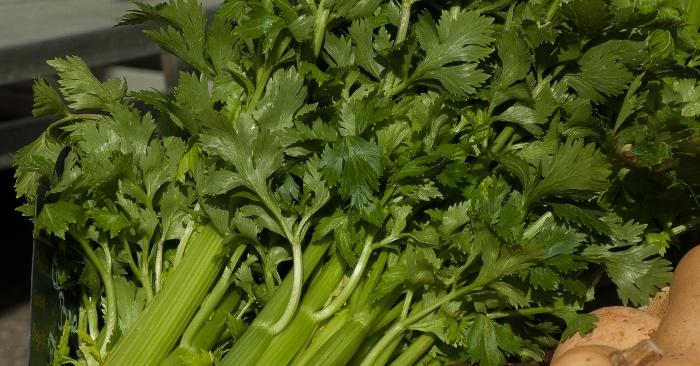 rau cần tây còn giúp thanh lọc cơ thể, giải nhiệt, hạ đường huyết cho người tiểu đường, huyết áp cao vô cùng tốt.