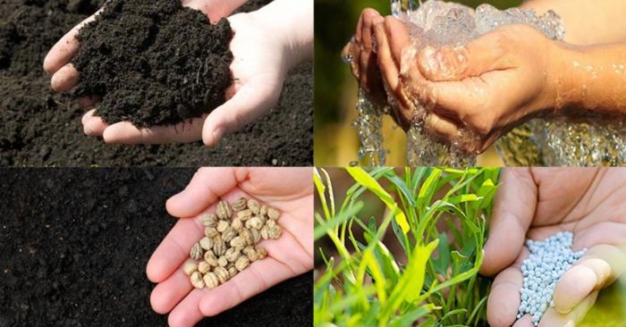 Không quan tâm đến đất trồng và chăm bón quá kỹ gây thừa chất dinh dưỡng là hai yếu tố làm ảnh hưởng đến chất lượng cây trồng. Mỗi loại cây có nhu cầu dinh dưỡng và độ màu mỡ của đất khác nhau, vì thế đây là yếu tố bạn cần nắm được trước khi muốn trồng một loại cây nào đó nếu muốn chúng sinh trưởng khỏe mạnh, đơm hoa, kết trái.