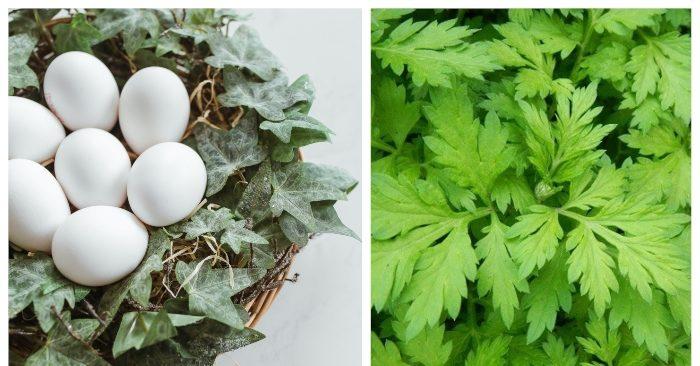 trứng gà ngải cứu là món ăn bài htuoocs rất tốt cho sức khỏe; đặc biệt với phụ nữ, món ăn này không chỉ trị nhiều bệnh phụ khoa hiệu quả mà nó còn giúp làn da của phụ nữ sáng mịn