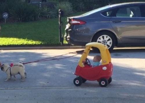 ảnh hài: cổ xe cún
