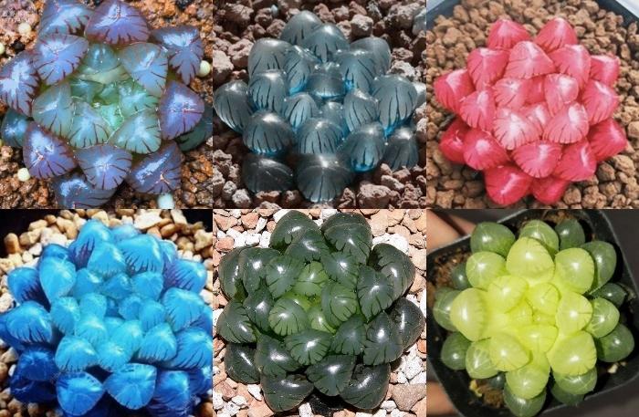 Cách chăm sóc sen đá kim cương; Cách chăm sóc sen đá móng; Cách chăm sóc sen đá trong phòng máy lạnh; Cách trồng sen đá bằng lá.