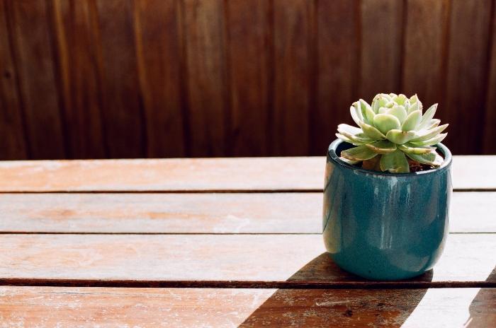 Chậu trồng sen đá hình thú; Chậu nhựa trồng sen đá; Các loại chậu trồng sen đá; Chậu nhựa trồng hoa sen.