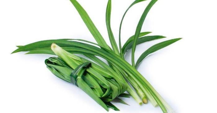 Cách nấu chè trôi nước lá dứa thơm lừng...Dứa thơm hay còn gọi là lá dứa là loài thực vật thân thảo dùng làm gia vị trong ẩm thực Đông nam Á nhất là trong những món quà ngọt tráng miệng