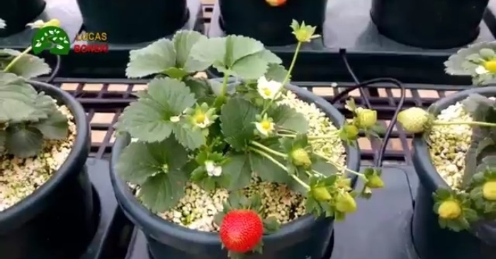 Trồng rau và trái cây an toàn tại nhà là xu hướng được nhiều người ưa chuộng.