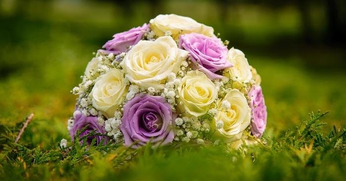 Hoa hồng; ngôi nhà hoa hồng; hoa hồng đẹp; nước hoa hồng là gì; Nước hoa hồng có tác dụng gì;