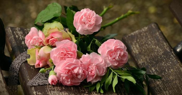 Trà hoa hồng; hoa hồng trắng; cách chăm sóc hoa hồng; cách trồng hoa hồng; ý nghĩa hoa hồng.