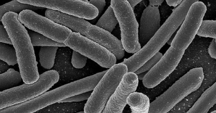 Vi Khuẩn đôi khi còn được gọi là vi trùng, là vi sinh vật đơn bào có kích thước nhỏ