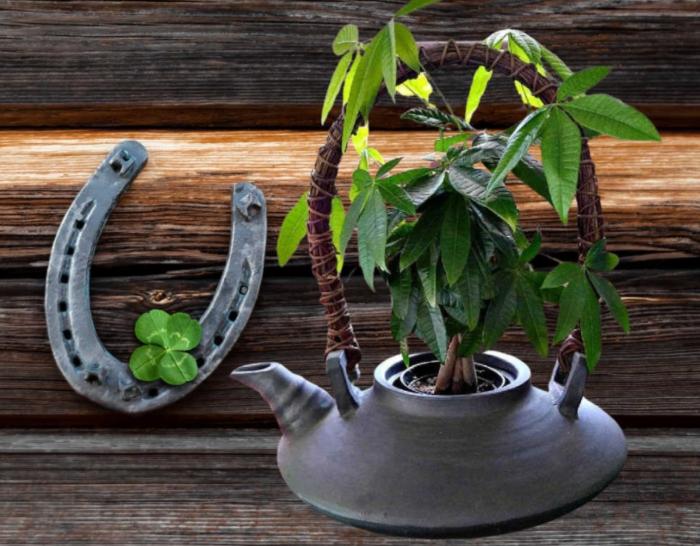 Nên trồng trong nhà 10 loại cây cảnh này vì vừa thanh lọc không khí lại giúp gia chủ tấn tài tấn lộc