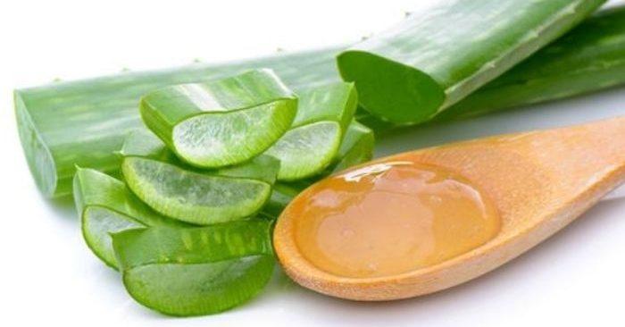 Cây nha đam còn có tên là lô hội, long tu, lưỡi hổ... Tên khoa học: Aloe vera L . Theo Đông y, nha đam vị đắng, tính hàn. Vào kinh can, tỳ, vị, đại trường. Có tác dụng thông đại tiện, thanh nhiệt, mát gan, sát trùng, thường dùng làm thuốc xổ trị táo bón, chữa viêm loét dạ dày, làm lành vết thương, bệnh ngoài da, thông kinh nguyệt, sỏi niệu, đái tháo đường... Trong lá nha đam có lớp thịt gọi là gel nha đam – gel này chứa vitamin A, C và E đóng vai trò như chất chống oxy hóa, giúp cơ thể chống lại các gốc tự do