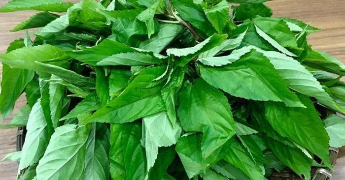 Theo y học hiện đại, rau đay chứa nhiều canxi, sắt, beta caroten, chất xơ, magie, và các loại vitamin A, B, E, C.