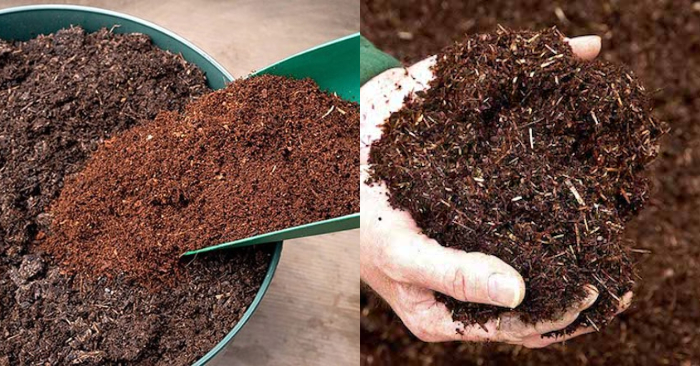 Hướng dẫn; Kinh nghiệm trồng sen đá; bằng đất gì; bằng đất thường được không; mini.