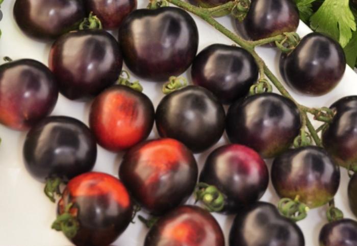 Cà chua đen có tác dụng gì; Trọng lượng 100g cà chua đen có thể đáp ứng 28% lượng vitamin A (tốt cho thị lực) và 21,5% lượng vitamin C