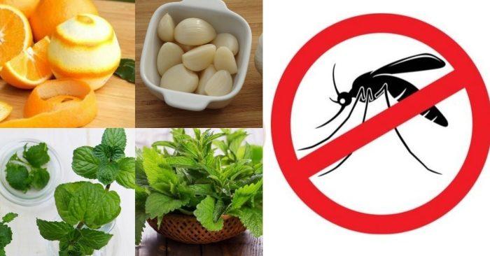 Những nguyên liệu có sẵn tại nhà như vỏ bưởi, cam , quýt; tỏi, bã che... được sử dụng làm cách đuổi muỗi an toàn và vô cùng hiệu quả.