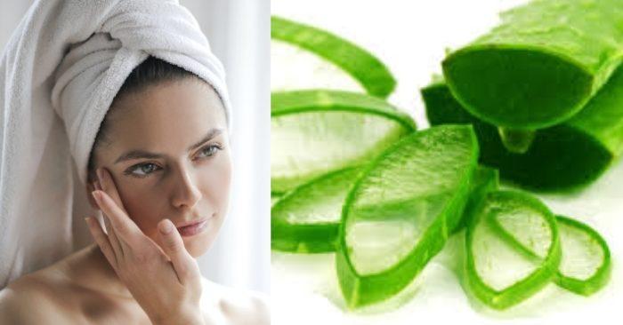 Nha đam (lô hội) chứa nhiều dưỡng chất có tác dụng dưỡng ẩm và làm trắng da vô cùng hiệu quả