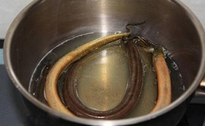 Cách nấu súp lươn cho bé; Cách làm thịt lươn cho bé; Lươn xào cho Be an cơm; Lươn kho gừng; Lươn kho sả ớt.