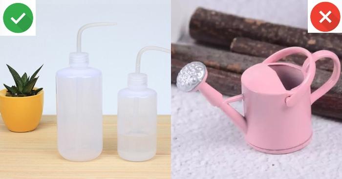 Cách tưới nước cho sen đá; khi mới mua về; bằng nước vo gạo, dùng bình tưới gì, cách thức.
