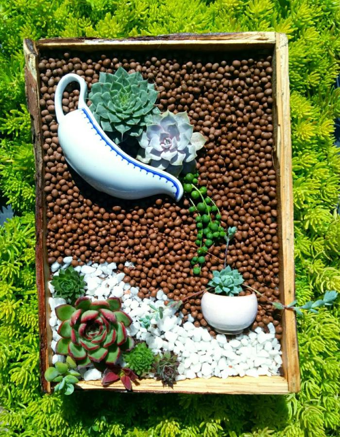 Hạt giống sen đá mix nhiều màu giá rẻ - quy trình ươm chi tiết; Mua bán, Quảng Nam, Quảng Ninh.