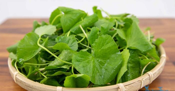 Thân cây rau má mảnh khảnh và nhẵn, là loại thân bò lan, màu xanh lục hay lục ánh đỏ, có rễ ở các mấu.