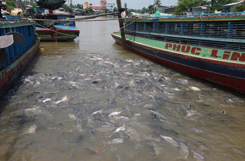 Anh Tâm cho biết, có nhiều người đến đánh bắt đàn cá, nên rất mong cơ quan chức năng đặt biển cấm tại đoạn sông đàn cá sinh sống.