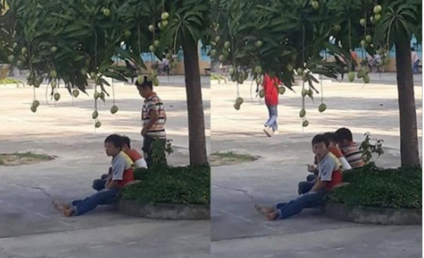 """Hình ảnh học sinh 'thờ ơ"""" với những trái xoài ngay bên cạnh."""