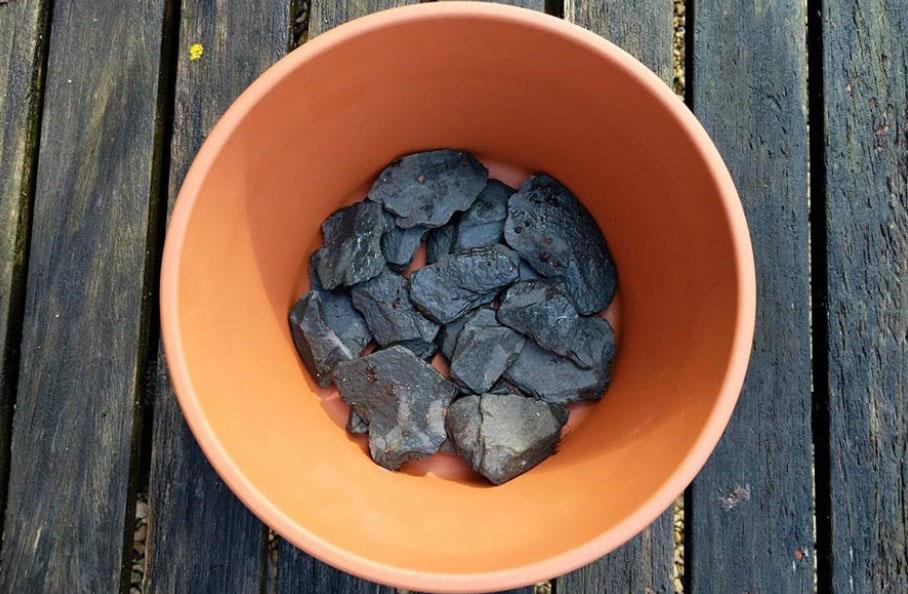 Chậu; chọn đất lọc sạch, bổ sung thêm than và sơ dừa, thoát nước tốt và phun sương, không úng nước.