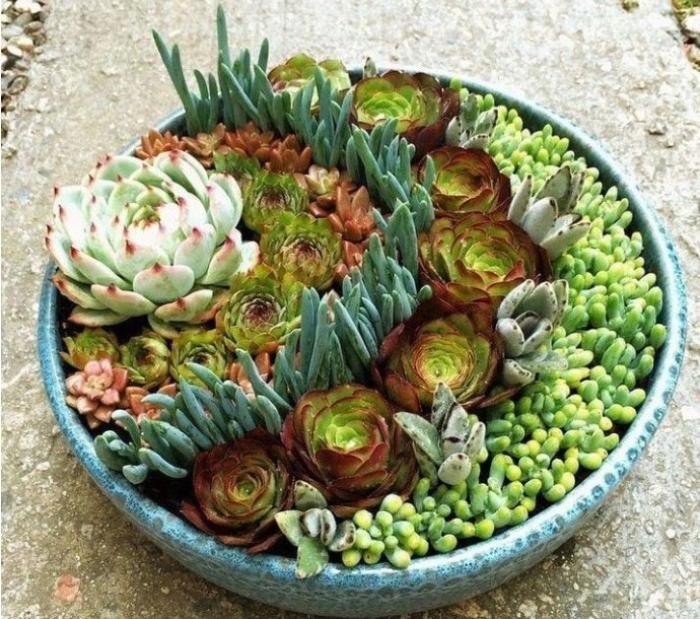 Cách trồng sen đá nghệ thuật đẹp mắt; Chơi Thiết kế vườn; có ý nghĩa gì; hợp tuổi nào; mệnh gì