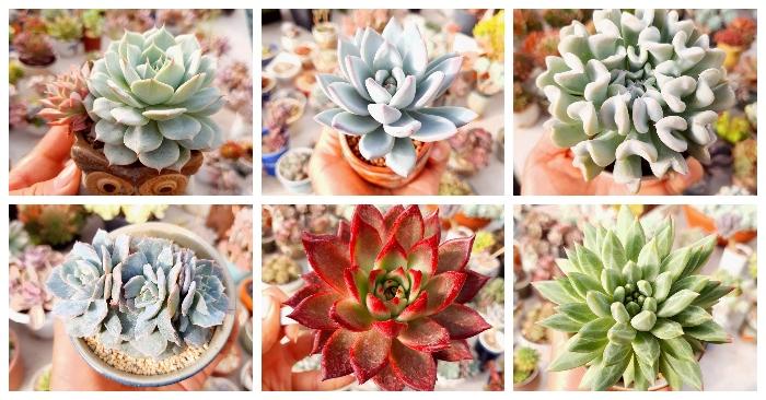 Thủ Đức, Fresh Garden, Joy Garden sen đá, Hồ Chí Minh, Bình Định, Bình Phước, Gia Lai, Điện Biên.