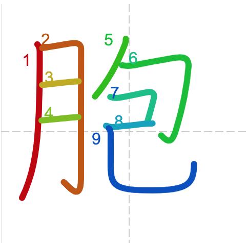 Học từ vựng tiếng Trung có trong sách Chuyển Pháp Luân - chữ bào; học tiếng trung; học tiếng trung; từ vựng tiếng trung; học tiếng trung cơ bản