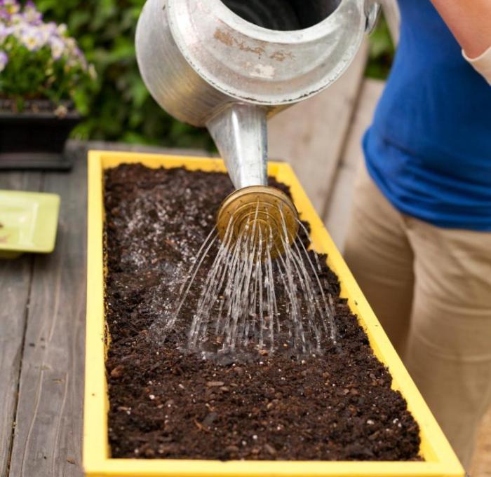 Trồng sen đá bằng hạt, đất thường được không; Cách chăm sóc sen đá; bao lâu thì lớn; loại chậu.