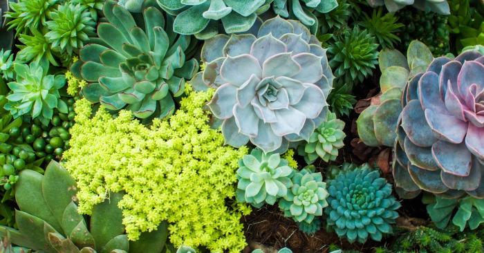 hoa tươi, thị trường, ý nghĩa, biểu tượng, kỹ thuật, các loài hoa, trang trí, điều kiện, phù hợp