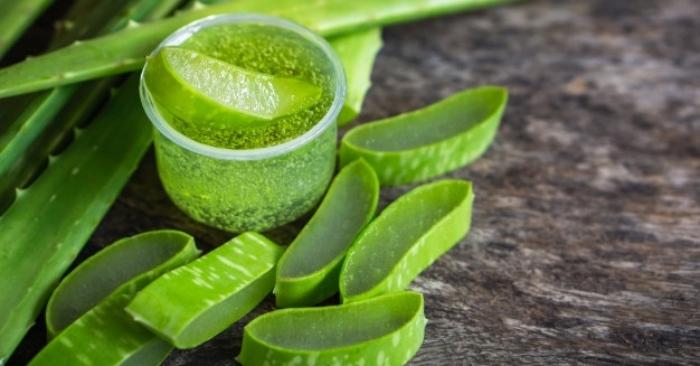 Gel nha đam là dung dịch bên trong lá nha đam. Đây là một chất nhầy đặc, trong suốt, là phần quý nhất của lá nha đam. Ăn nha đam sống có tốt không: