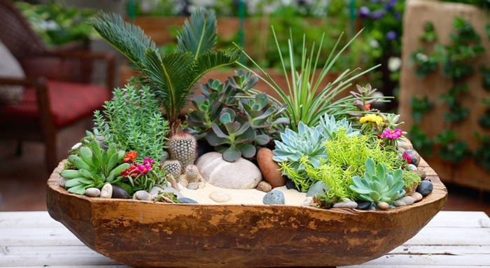 Tiểu cảnh sen đá TPHCM; Cách làm vườn sen đá; Phụ kiện trang trí tiểu cảnh sen đá; Trang trí sen đá trong nhà.