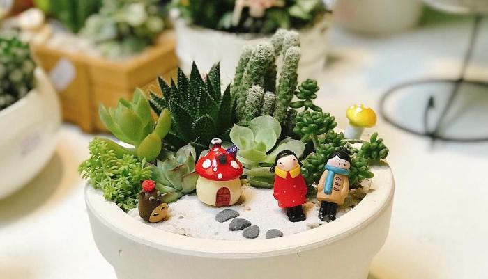 Các loại sen đá hiếm; Hoa sen đá đẹp; Những chậu sen đá đẹp; Cách trồng sen đá.