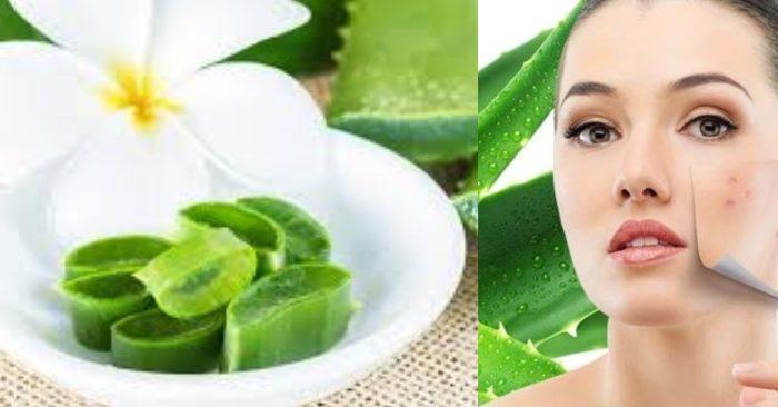 Nha đam được xem như một nguyên liệu làm đẹp đa năng và hiệu quả với tính chất dịu nhẹ, phù hợp với mọi loại da. Cách sử dụng gel nha đam nguyên chất để làm đẹp, giúp làm dịu da hư tổn, giữ ẩm và duy trì sự sáng khỏe cho da