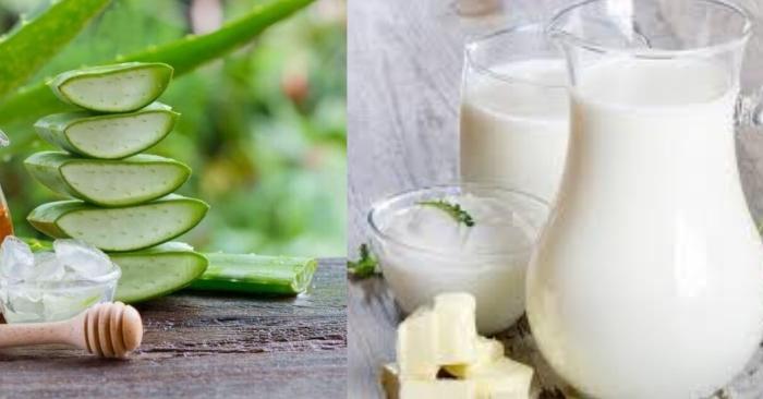 Sữa tươi có công dụng dưỡng ẩm cực tốt, phù hợp với tình trạng tóc xơ, rối hay hư tổn; kích thích mọc tóc bằng nha đam; dưỡng tóc bằng nha đam;