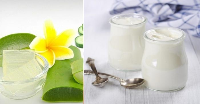 sữa chua có chứa hàm lượng protein vô cùng lớn giúp dưỡng tóc, kích thích tóc mọc nhanh chóng và óng ả; trị rụng tóc bằng nha đam;