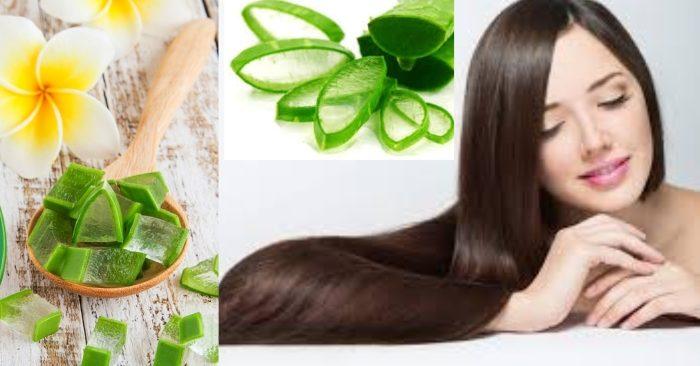 Không chỉ có tác dụng trong làm đẹp da; nha đam còn có công dụng bất ngờ với mái tóc nữa đấy. Dưỡng tóc bằng nha đam giúp tóc bạn luôn mềm mượt và chắc khỏe.
