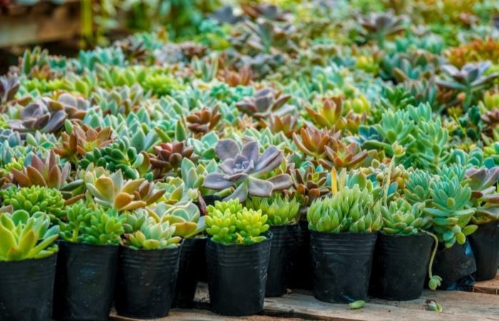 Những chia sẻ dành cho người mới bắt đầu kinh doanh sen đá; Rủi ro, hoa, cây cảnh mini;Terrarium;
