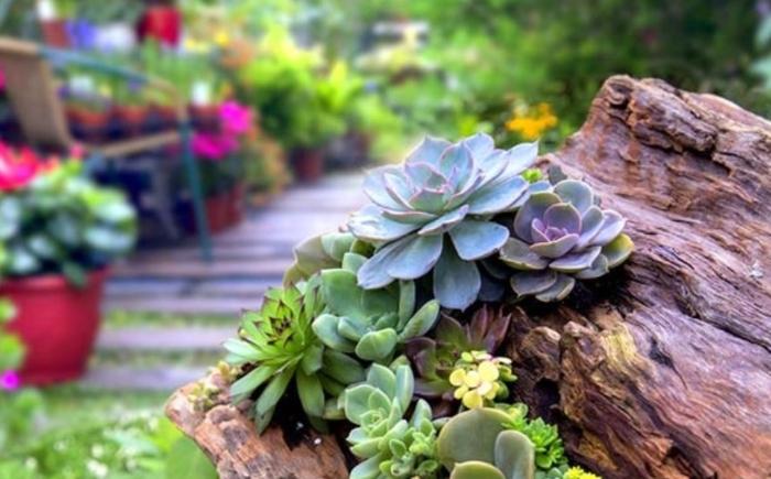 Những chia sẻ; Ngành nghề; Đề án kinh doanh cây cảnh; Nên trồng cây gì để; địa chỉ cung cấp nguồn.