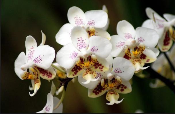 Các loại hoa lan phổ biến ở Việt Nam; Lan hồ điệp (Phalaenosis); 100 loại lan rừng; Xem các loại hoa lan.