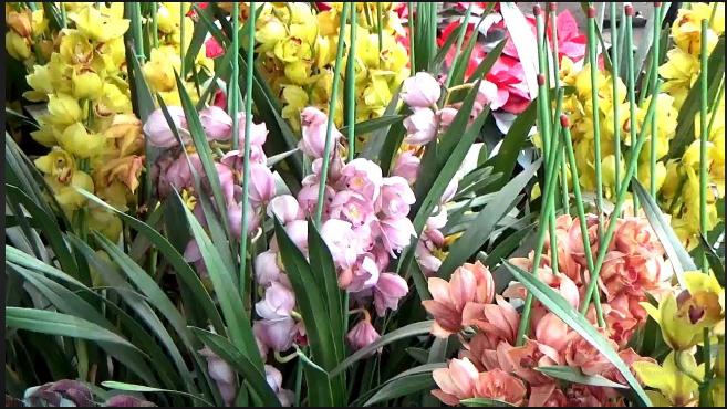 Các loại hoa lan phổ biến ở Việt Nam; Địa lan Sato; Hình ảnh các loài hoa phong lan; Xem các loại lan rừng đẹp nhất.