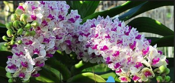 Các loại hoa lan phổ biến ở Việt Nam; Lan chi ngọc điểm; 39 loại lan rừng đẹp nhất; Tên các loại lan rừng Tây Nguyên.