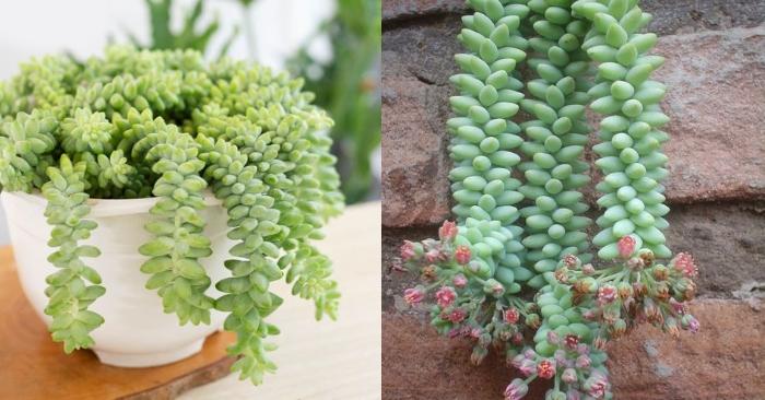 Cách chăm sóc cây lên màu đẹp; Kiểm soát lượng nước tưới; ánh sáng; nhiệt độ; dinh dưỡng.